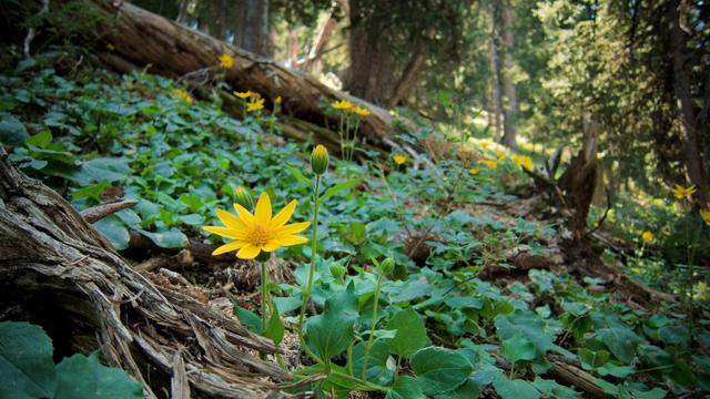 Forest with Yellow Flower